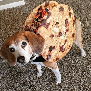 Dog ice cream sandwich costume 🌸 3/$15